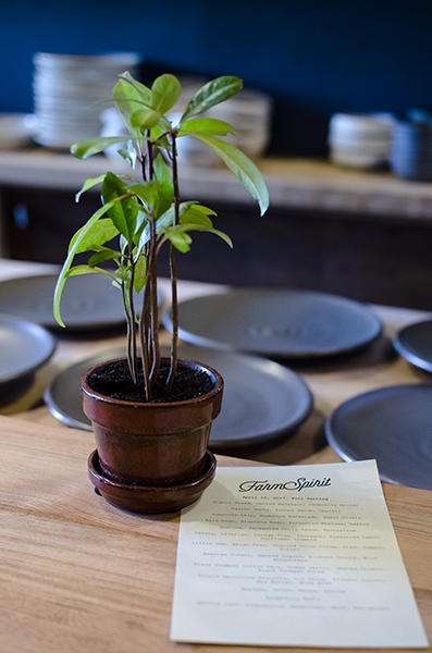 decorative plant and menu at Farm Spirit